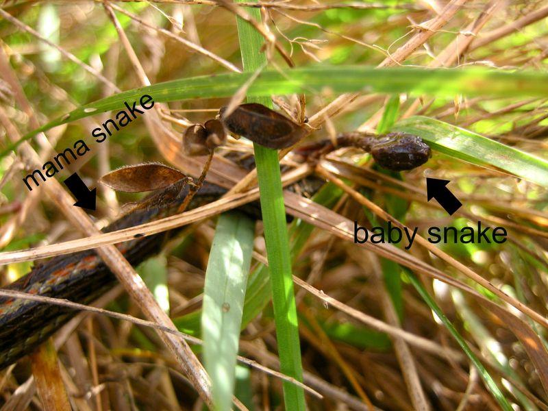 Snakebirth